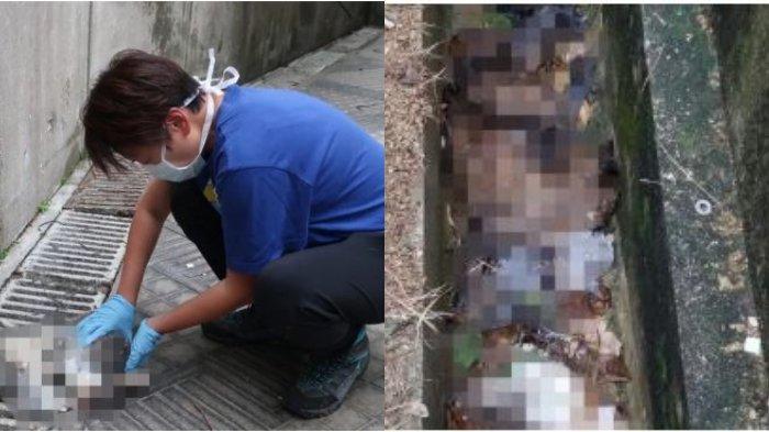 25 Hewan Ini Dilempar dari Gedung Tinggi, Belasan Tewas, Pemilik Diduga Takut Tertular Virus Corona