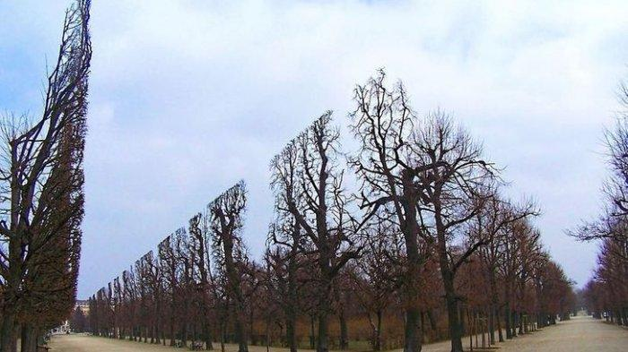 Bentuk deretan pohon seperti di dalam video gim.