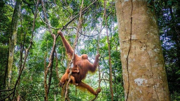 4 Tempat di Indonesia Masuk Situs Warisan Alam UNESCO, Ada yang di Papua Lho!