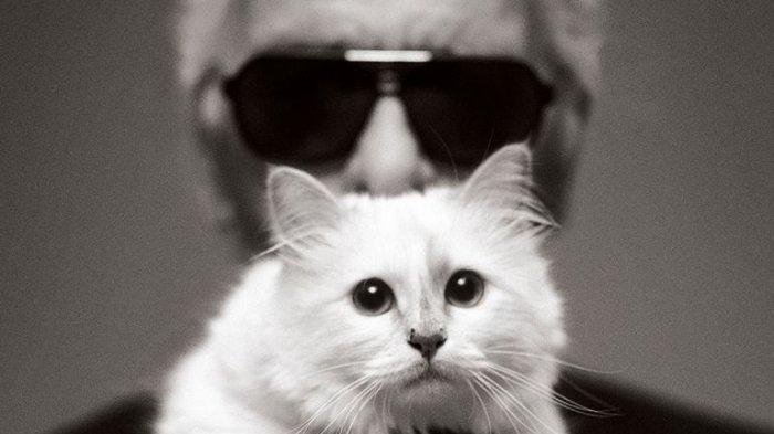 5 Fakta tentang Choupette, Kucing Mendiang Karl Lagerfeld yang Kini Jadi Hewan Peliharaan Terkaya