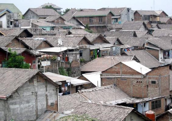 Dampak Abu Gunung Merapi, Tanaman Sayur Rusak, Warga Magelang Kesulitan Cari Pakan Ternak