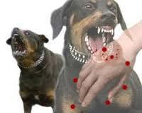 Murid SD Digigit Anjing Gila, Langsung Dilarikan ke Puskesmas Pakue Kolaka Utara
