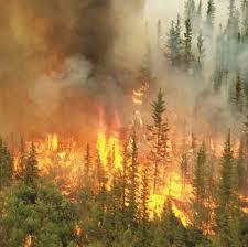 Hutan Pinus Sigrowong Temanggung Terbakar, Diduga Ini Penyebabnya