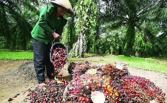 Sinar Mas Agribusiness and Food Ajak Pemasok Bangun Citra Positif Industri Sawit yang Berkelanjutan