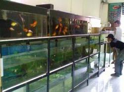 Pengusaha Ikan Hias Keluhkan Persyaratan Ekspor