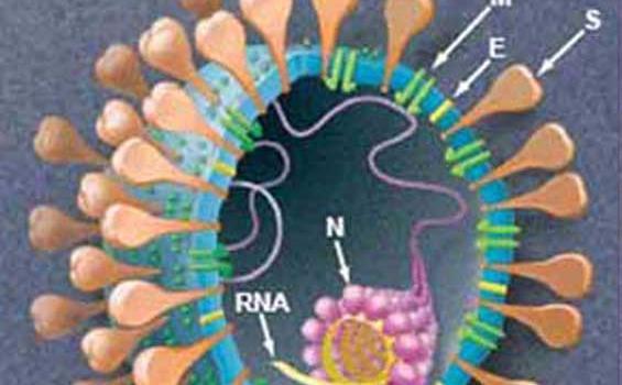 Virus corona1.