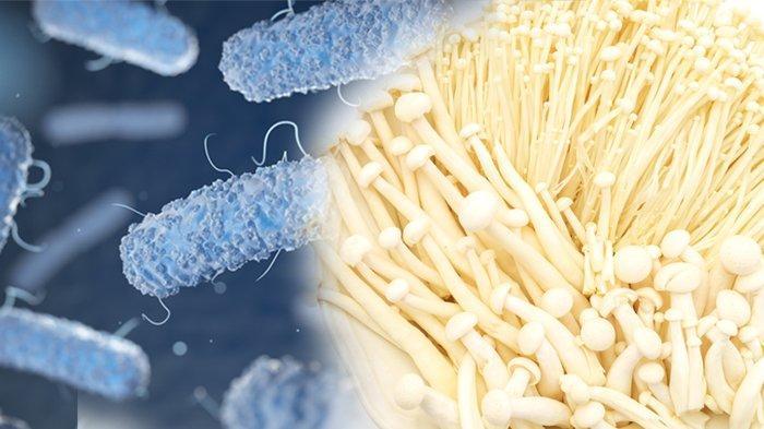 Ahli Beberkan Keunikan Listeria Monocytogenes, Bakteri yang Sudah Ditemukan Sejak 1924