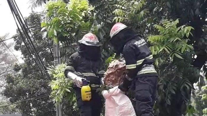 Warga Tulungagung Diminta Selektif Laporkan Evakuasi Tawon Vespa