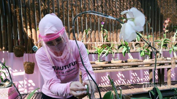 Terpidana kasus korupsi, Angelina Sondakh tengah merawat tanaman anggrek di Lembaga Pemasyarakatan (Lapas) Perempuan Kelas IIA Pondok Bambu, Jakarta Timur, Jumat (17/7/2020). Selama berada didalam Lapas Pondok Bambu, Angelina Sondakh mengisi waktu kosong dengan menanam sayuran hidroponik dan membaca buku. Tribunnews/Jeprima
