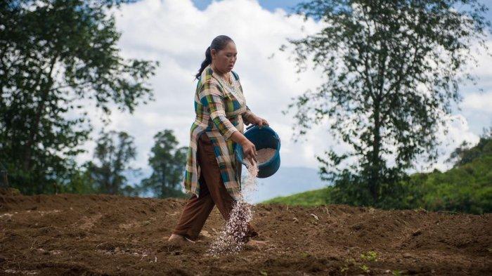Bahas Keuangan, NOVA Bersama Allianz Indonesia Ajak TaniFund Gelar Kulwap untuk Mitra Petani