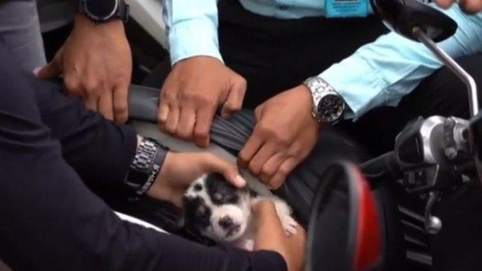 Dua Ekor Anak Anjing Ditemukan dalam Bagasi Bawah Jok Sepeda Motor Barbuk Balap Liar di Klungkung
