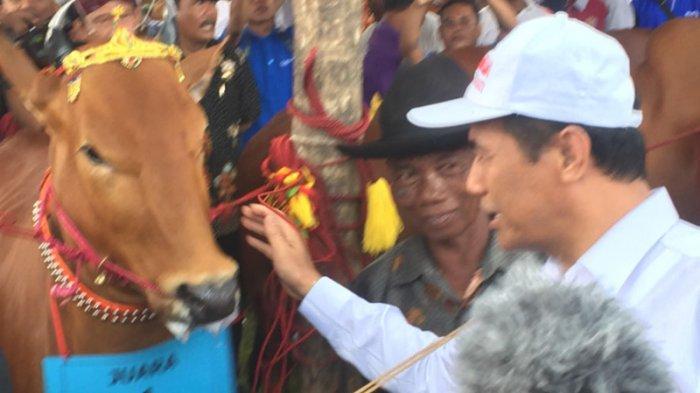 Program Ini Wujudkan Swasembada Daging Sapi Potong di Jawa Timur