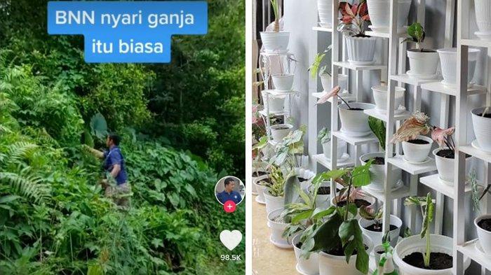 Anggota BNN yang Viral Ternyata Sudah Punya Koleksi 70 Tanaman Hias, Terpincut Sejak Adanya Pandemi