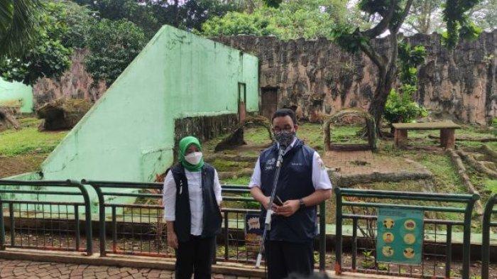Tangani 2 Harimau Terpapar Covid-19, Anies Baswedan Apresiasi Tim Dokter Taman Margasatwa Ragunan
