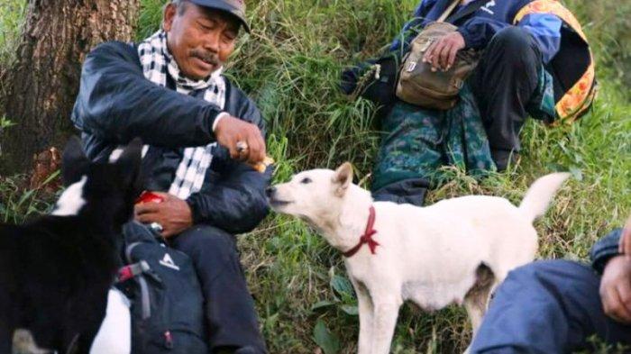 Perkenalkan Joni dan Jono, Dua Anjing Pemandu Pendaki Sampai Puncak Gunung Agung