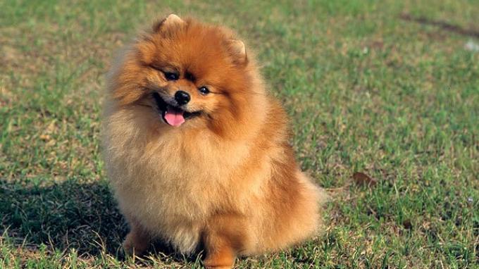 Seekor Anjing Dinyatakan Positif Covid-19, Rupanya Milik Seorang Bos sebuah Pabrik