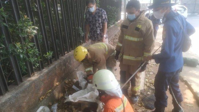 Damkar Evakuasi Anjing Tergeletak di Cilandak, Alami Luka Parah, Diduga Bekas Sayatan