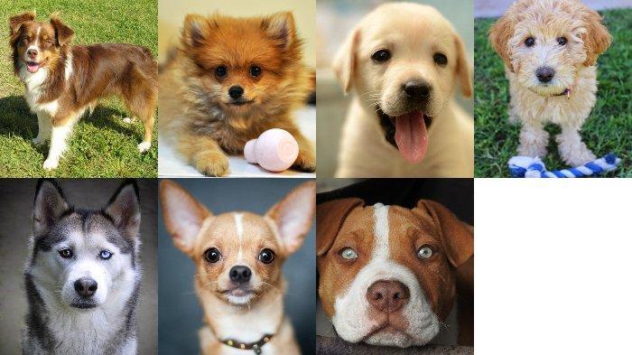 Tes Kepribadian - Jenis Anjing yang Kamu Pilih Dapat Ungkap Bagaimana Karakter Aslimu