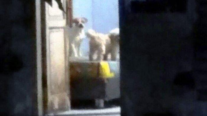 Tim Satwa Brimob Amankan 11 Ekor Anjing yang Gerogoti JasadPenjaga Indekos di Depok