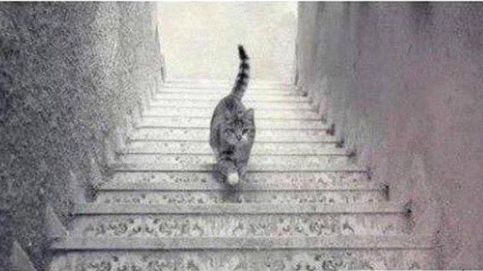 Apakah kucing menaiki tangga atau menuruni tangga? Jawabanmu akan ungkap karakter dalam dirimu.