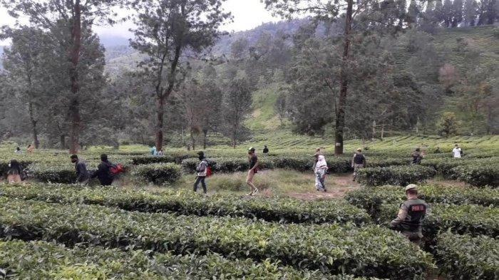 Cegah Covid-19, Aparat Bubarkan Kerumunan Wisatawan di Area Kebun Teh Puncak Bogor