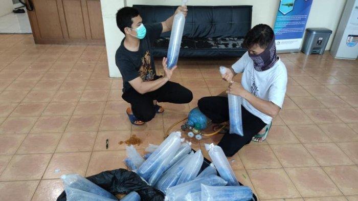 Modus Kirim Paket Garmen, 30 Kantong Benur Disita di Bandara Soetta