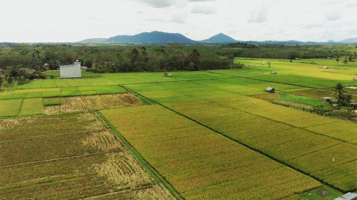 Target Luas Tanam 5,16 Juta Hektare, Kebutuhan Pupuk Subsidi Aman
