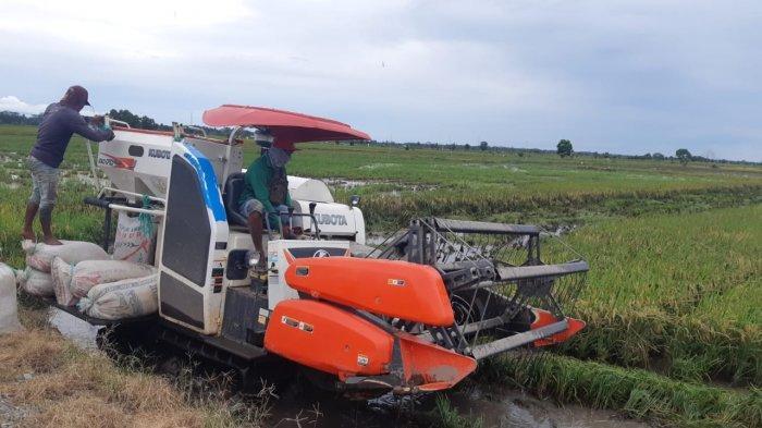 Petani Nilai Program Food Estate Berhasil Naikkan Produksi