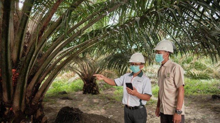 Aspek Keberlanjutan Jadi Tantangan Industri Kelapa Sawit ke Depan