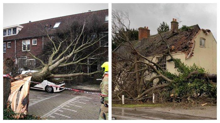 Akibat badai Ciara, sepasang suami istri menggambarkan bagaimana 'seluruh rumah mereka bergetar' setelah pohon menabrak atap rumah mereka selama Storm Ciara, di Willington Derbyshire