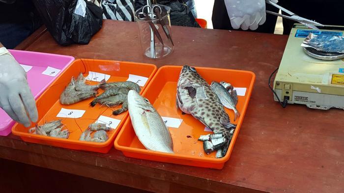 Tidak Ditemukan Kandungan Zat Berbahaya pada Ikan di Pasar Badung