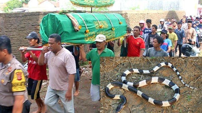 Keluarga, perangkat dan warga Desa Pamengkang Kecamatan Mundu Kabupaten Cirebon Jawa Barat mengantarkan jenazah Adila Oktavia, balita 4 tahun yang meninggal dunia setelah digigit ular weling, Kamis (13/2/2020). Adila digigit ular pada JUmat malam (7/2/2020), dan dinyatakan meninggal pada Rabu (12/2/2020), setelah menjalani penanganan medis lima hari di RSD Gunung Jati Kota Cirebon.