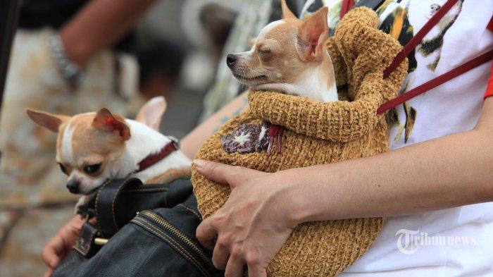 JIPS x PetFest Kembali Digelar, Komunitas Breeder Kucing dan Pecinta Kelinci Ikut Meramaikan
