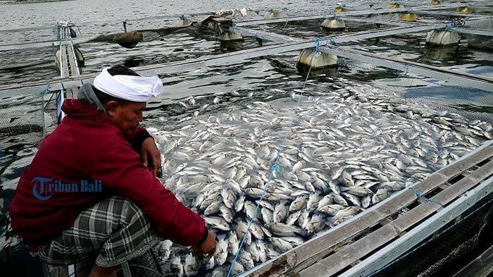 Peternak Ikan Belum Berani Beraktivitas Meski Semburan Belerang di Danau Batur Mulai Berkurang
