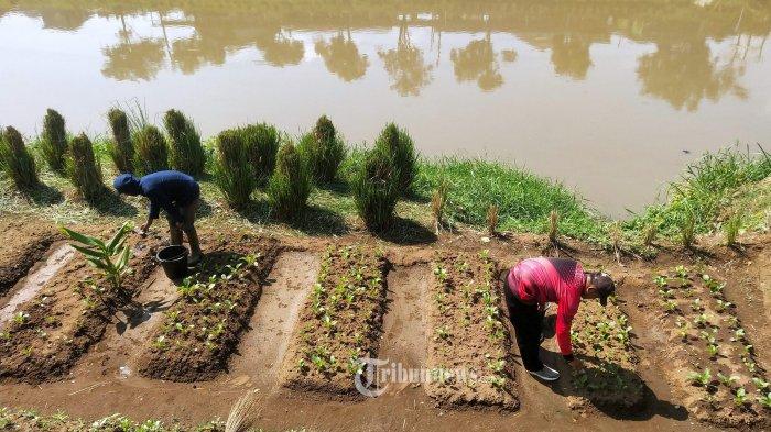 Petani Disarankan Rasional dalam Penggunaan Pupuk