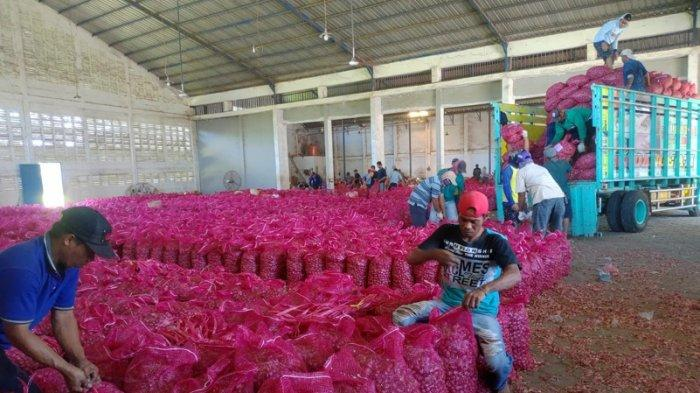 Cegah Harga Jatuh Saat Musim Panen, Ekspor Bawang Merah Bakal Digenjot