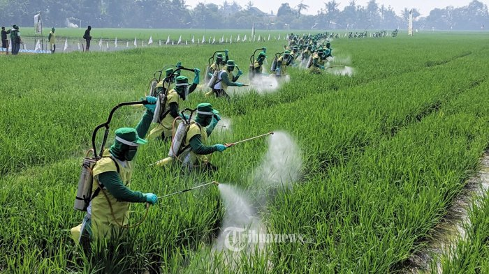 Meski Anggaran Turun, Kinerja Sektor Pertanian Melesat Naik