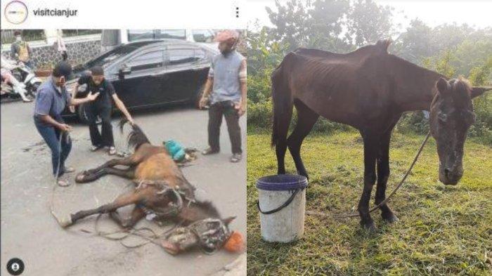 Nasib Kuda Delman di Cianjur yang Viral Jatuh Terkapar karena Kelelahan, Kini Jauh Lebih Sehat
