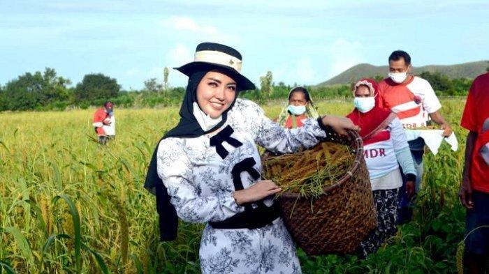 Panen Padi Hotong, Bella Shofie Tampil Modis di Tengah Hamparan Sawah, Klaim ''Petani Jaman Now''