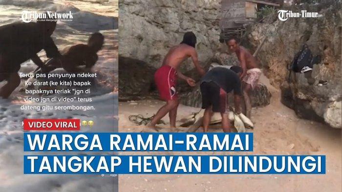 Berawal dari Video Viral Eksploitasi Penyu, 7 Nelayan di Gunungkidul Ditangkap, Terancam Bui 5 Tahun