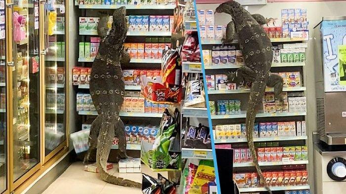 VIDEO Biawak Raksasa Panjang Hampir 2 Meter Masuk Minimarket di Thailand, Memanjat Rak-rak Makanan