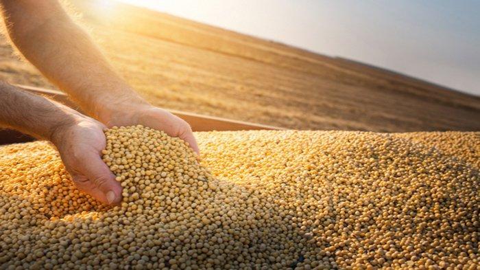 Harga Biji-bijian Meningkat di Jepang, Harga Makanan Berpotensi Ikut Naik