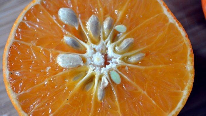 Biji jeruk