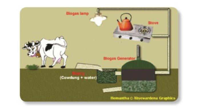 Bacaan Biogas di Buku Tematik Tema 6 Kelas 3 SD.