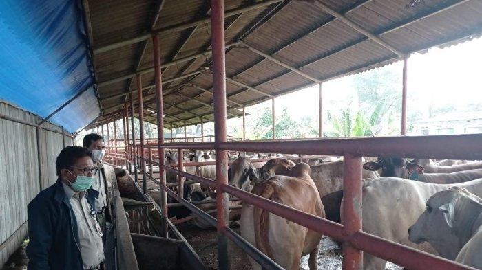 Kementan Pastikan Ketersediaan Daging Sapi untuk Lebaran Aman