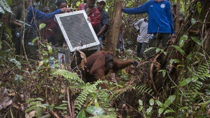 Jauh-jauh dari Jakarta ke HSU Untuk Cari Orangutan, Malah Ini yang Ditemukan