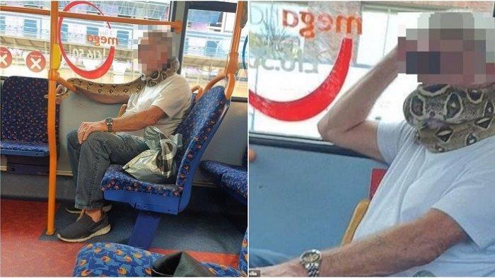 Nyaris Bikin Panik, Bapak-bapak Gunakan Ular Peliharaan Buat Pengganti Masker saat Naik Bus
