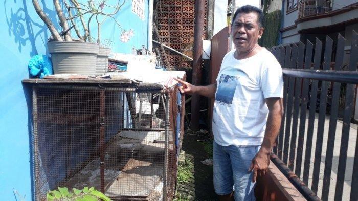 Cerita Jackie, Ular Sanca yang Dievakuasi Damkar Karena pemilik Tak Sanggup Memberi Makan Ayam