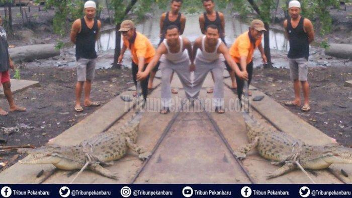 Warga Desa Tanjung Darul Takzim Resah, Buaya Masuk Permukiman Hingga Memangsa Hewan Ternak