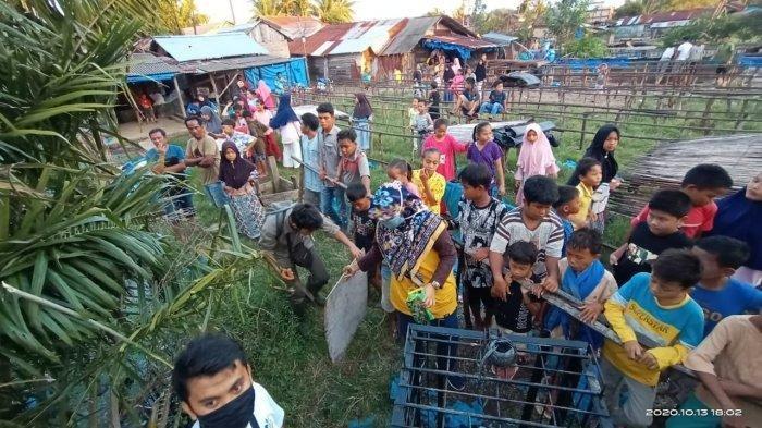 Warga menyaksikan BKSDA Sumbar memasang 2 perangkap buaya di Nagari Aia Bangih, kecamatan Sungai Beremas, Kabupaten Pasaman Barat, Sumatera Barat, Rabu (14/10/2020).